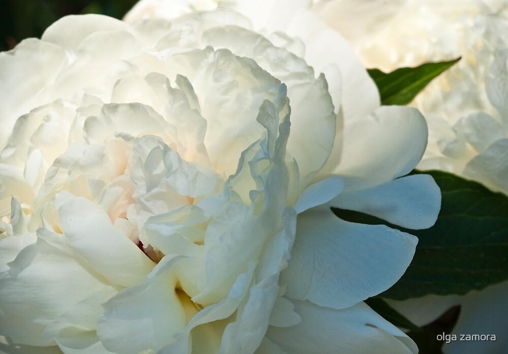 White Glow by olga zamora
