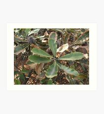 bottle brush leaves Art Print