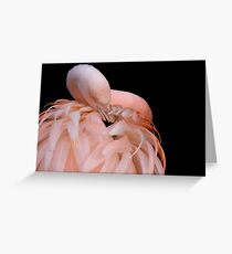 Flamingo Greeting Card