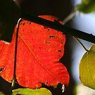 Sunlit Leaf by v-something