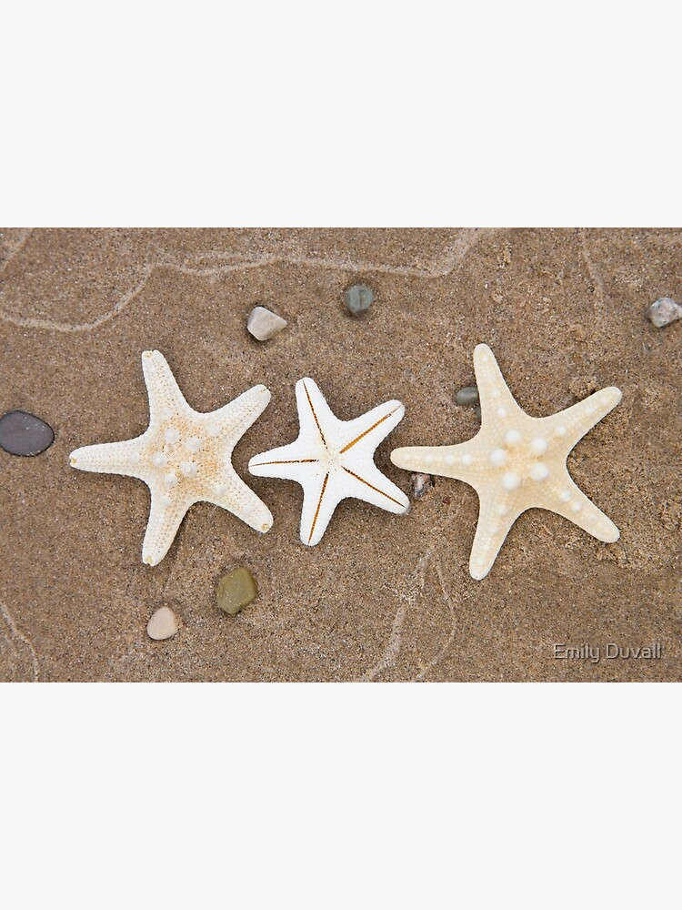 Starfish in the Sand by PeaceAndBeauty