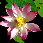 Lotus for Daisy by Janone