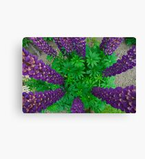 Ring of  Lupins Canvas Print