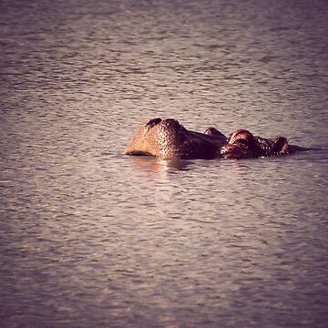Hippo by mattstreatfeild