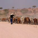 NAMIBIAN CATTLE by IngridSonja