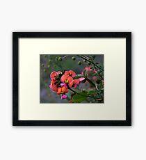 Pea Flower Framed Print