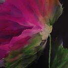 Windblown Blossom by Michelle Erickson