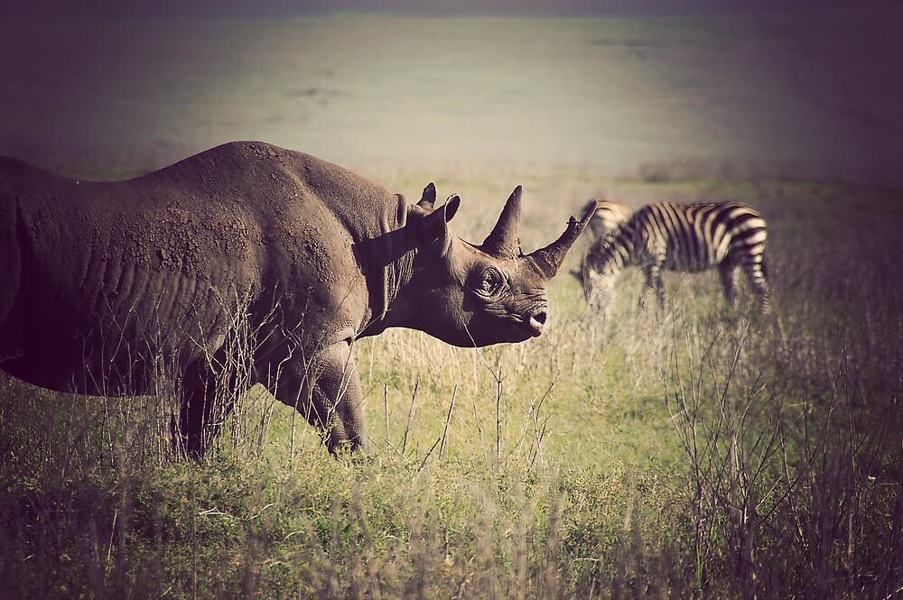 Rhino by Matt  Streatfeild