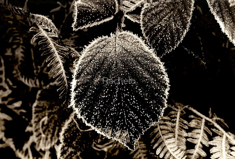 Frosted Leaf by Rachelo