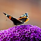 Butterfly & Lilac #2 by Trevor Kersley