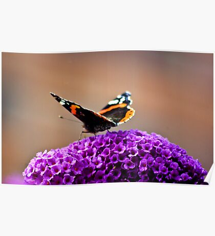 Butterfly & Lilac #2 Poster