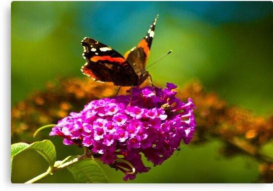 Butterfly & Lilac #3 by Trevor Kersley