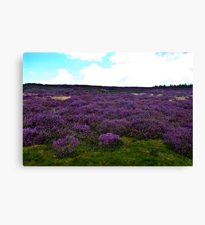 Heather on the Moors. Canvas Print