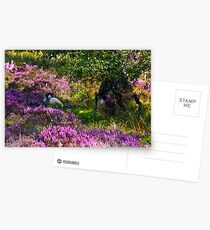 Resting amongst the Heather Postcards