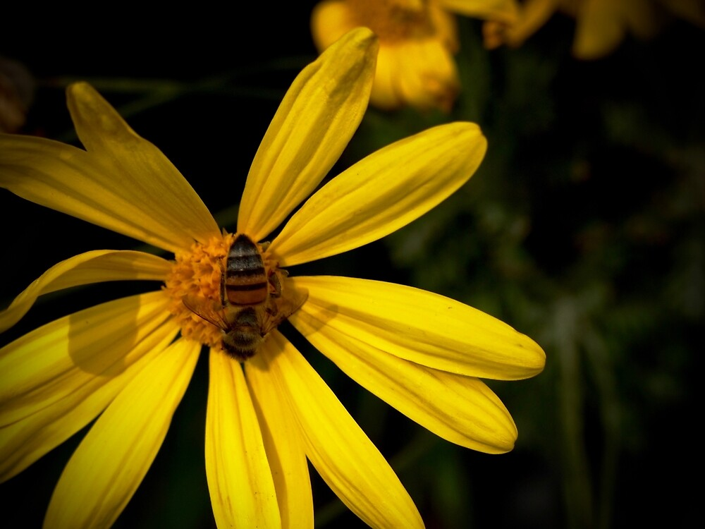 Bee on Yellow Flower by Douglas E.  Welch