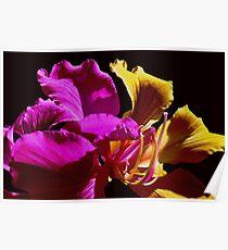 Fantasia Flower Poster