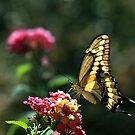 Backyard Visitor by Ann J. Sagel