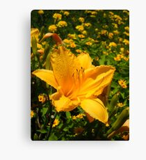 Playful Lilly Canvas Print