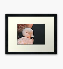 Pink With Desire Framed Print