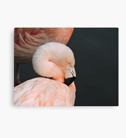 Pink With Desire Canvas Print