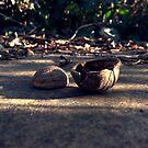 «You drive me nuts!» de bd0m