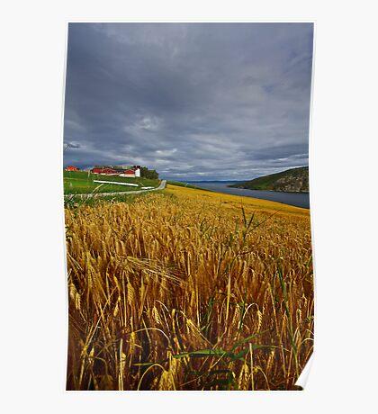 Views: 4470 .The DeeZ 5Cs Award Banner. Verrasundet Sor-Trondelag . Norway. Brown Sugar Story . This image Has Been S O L D .  Brilliant work Poster