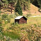 Meadow Shack by Sandra Harris