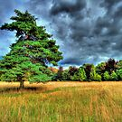 Lone Tree in a Storm by AndyV