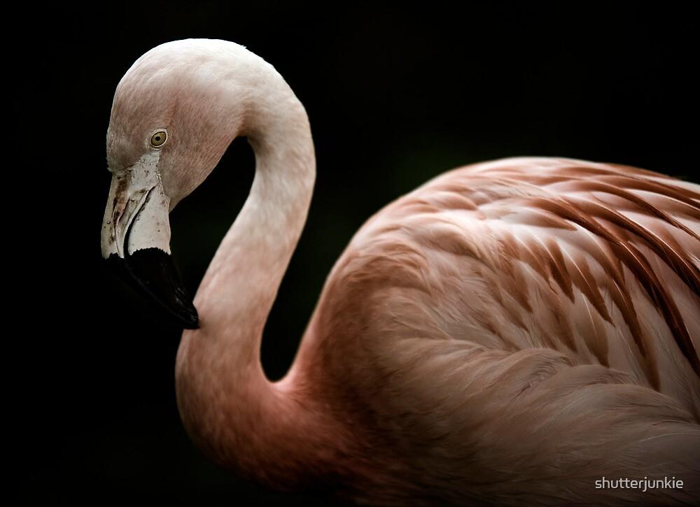 Pink by shutterjunkie