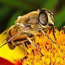 Pollination 11 by Gareth Jones