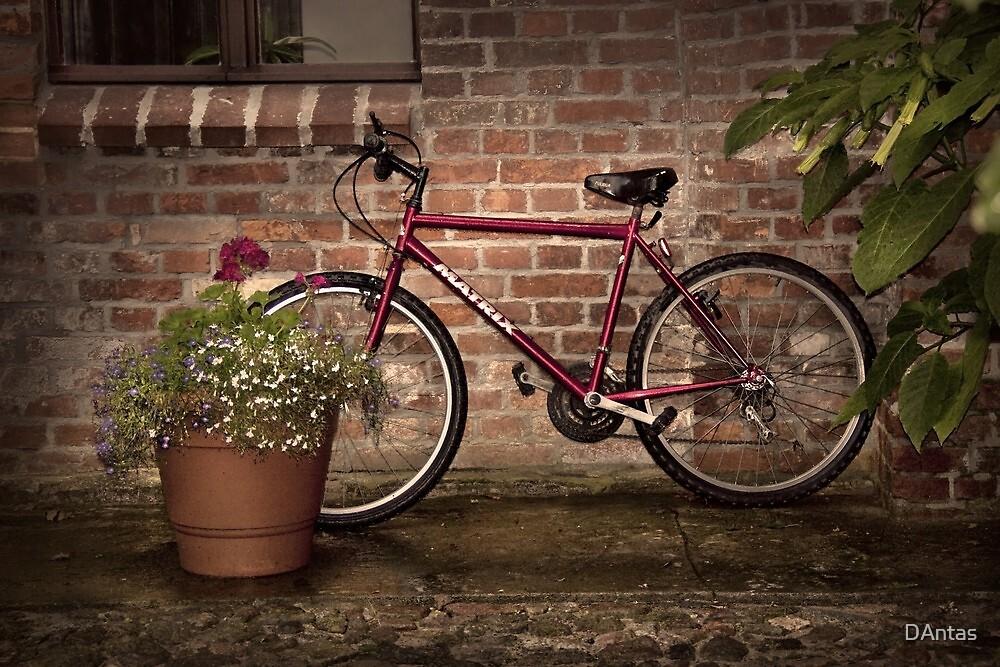 Red Bike Story by DAntas