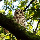 Fausse Feathered Friend by Alison M