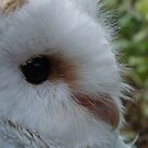 barn owl profile by purpleminx