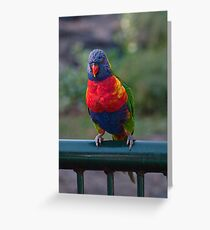 Rainbow lorikeet, trichoglossus haematodus Greeting Card