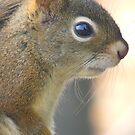 Portrait of A Red Squrril by MaeBelle