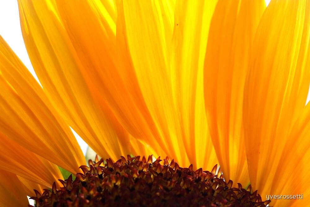 sun burn by yvesrossetti