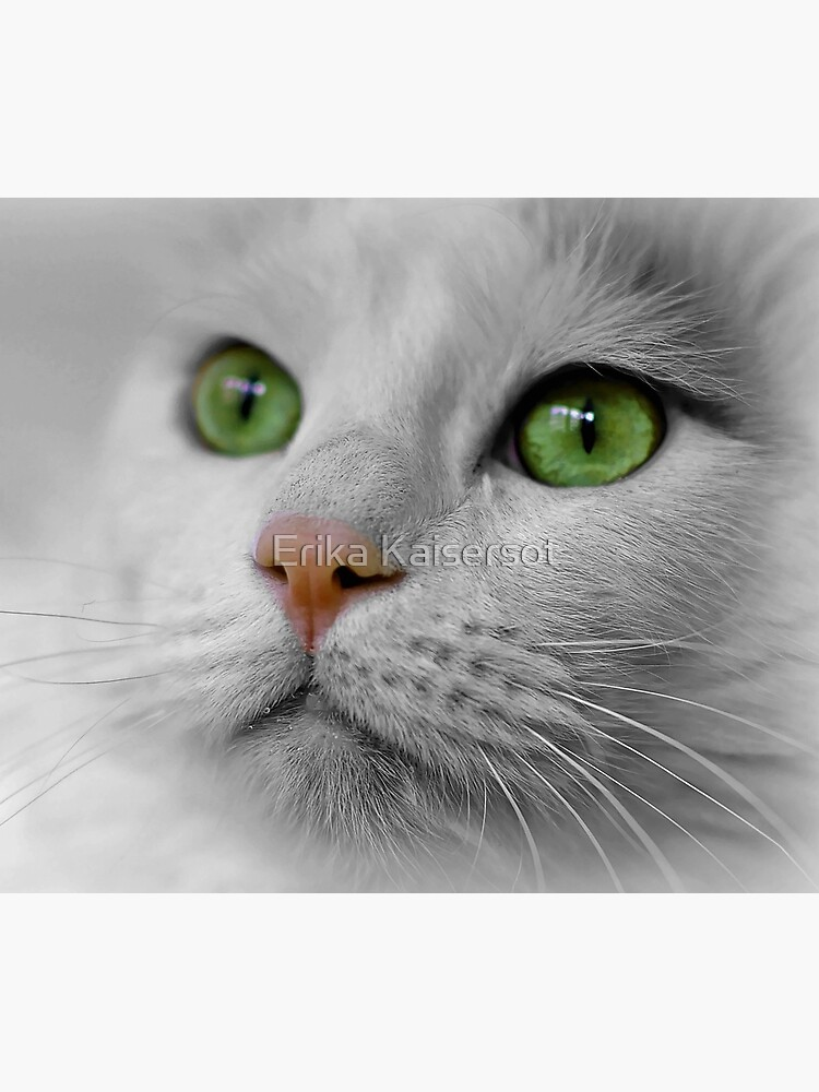 White Cat wit Green Eyes by ErikaKaisersot