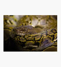 Coiled Photographic Print