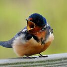 Barn Swallow by Nancy Barrett