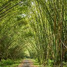 Bamboo Cathedral by Land of the Hummingbird