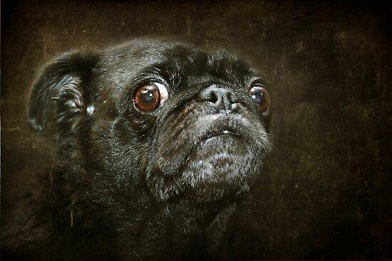 Pug by Susanne Correa