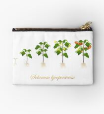 Solanum lycopersicum development  Zipper Pouch
