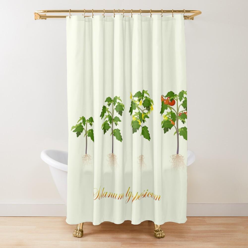 Solanum lycopersicum development  Shower Curtain