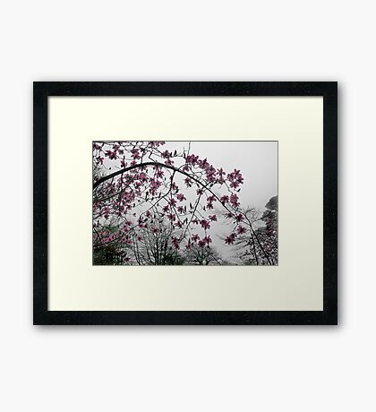 Magnolia in the Mist Framed Print