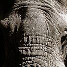 Kruger National Park, South Africa. 2009  III by Didi Bingham