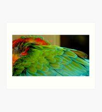 Macaw at Jungle Gardens III Art Print