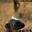 Kruger National Park, South Africa. 2009  V by Didi Bingham