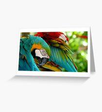 Macaws at Jungle Gardens VII Greeting Card