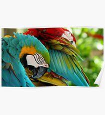 Macaws at Jungle Gardens VII Poster