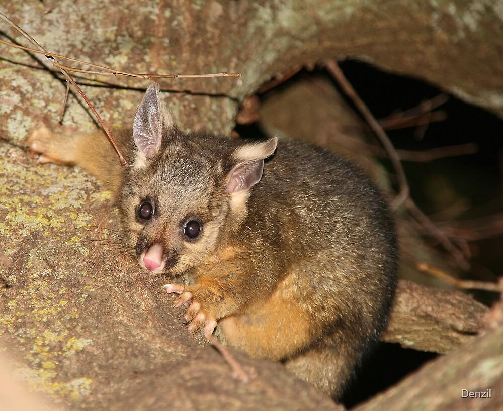 It's baby possum season!!! by Denzil